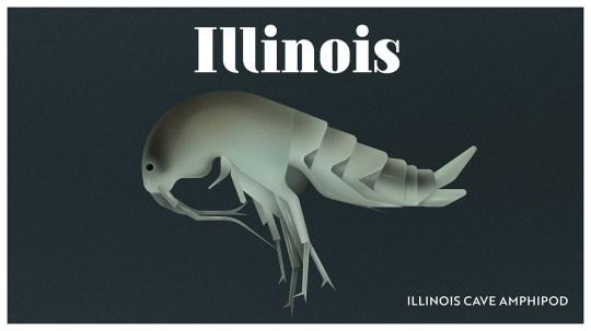 Endangered Animals Moss and Fog Illinois