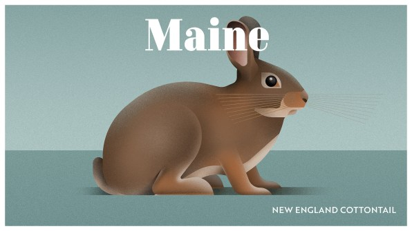 Endangered Animals Moss and Fog Maine