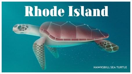 Endangered Animals Moss and Fog Rhode Island