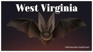 Endangered Animals Moss and Fog West Virginia