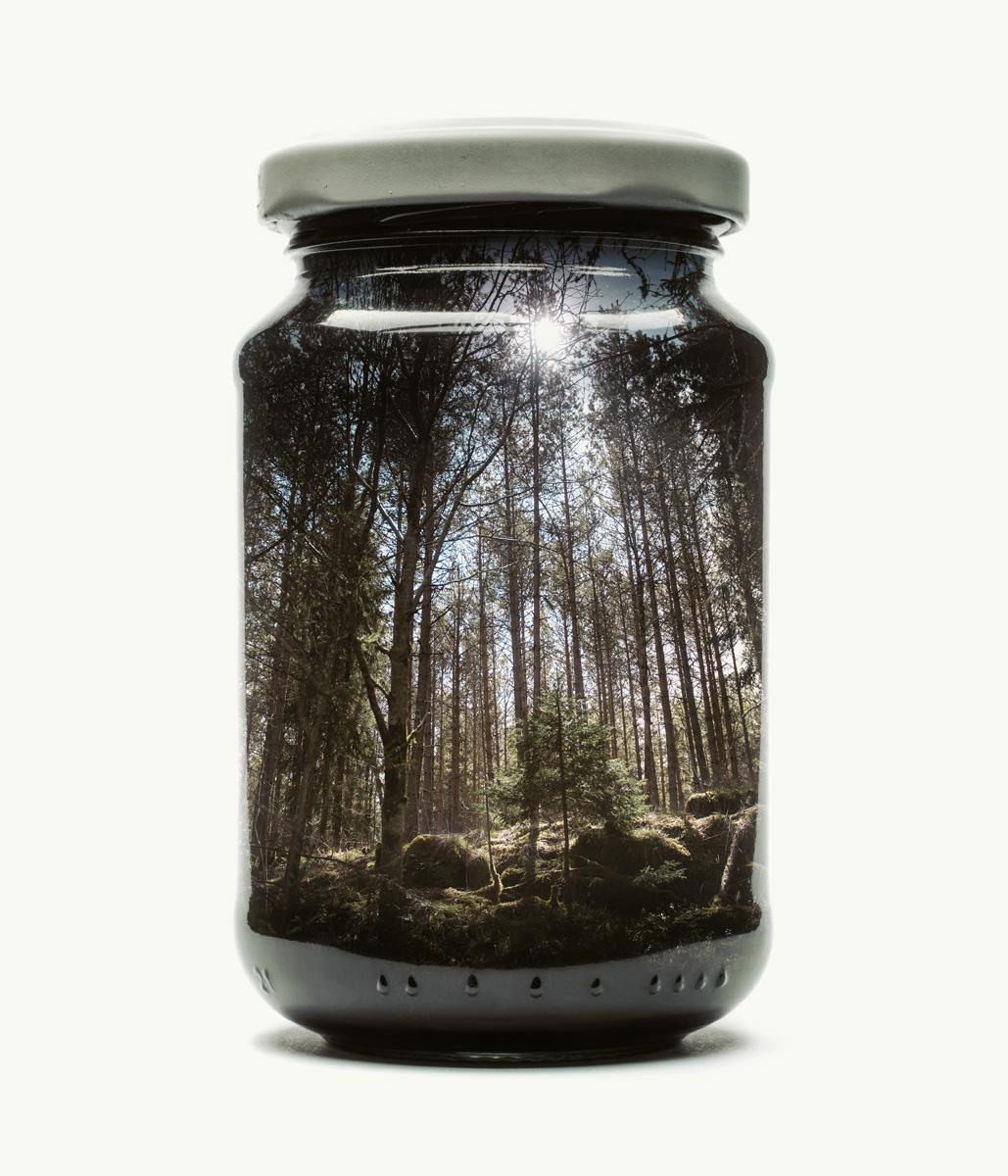 jarred-pine-forest