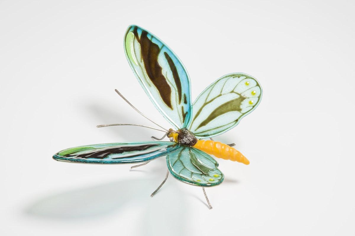 Queen-Alexandra-Birdwing-Butterfly-2-min