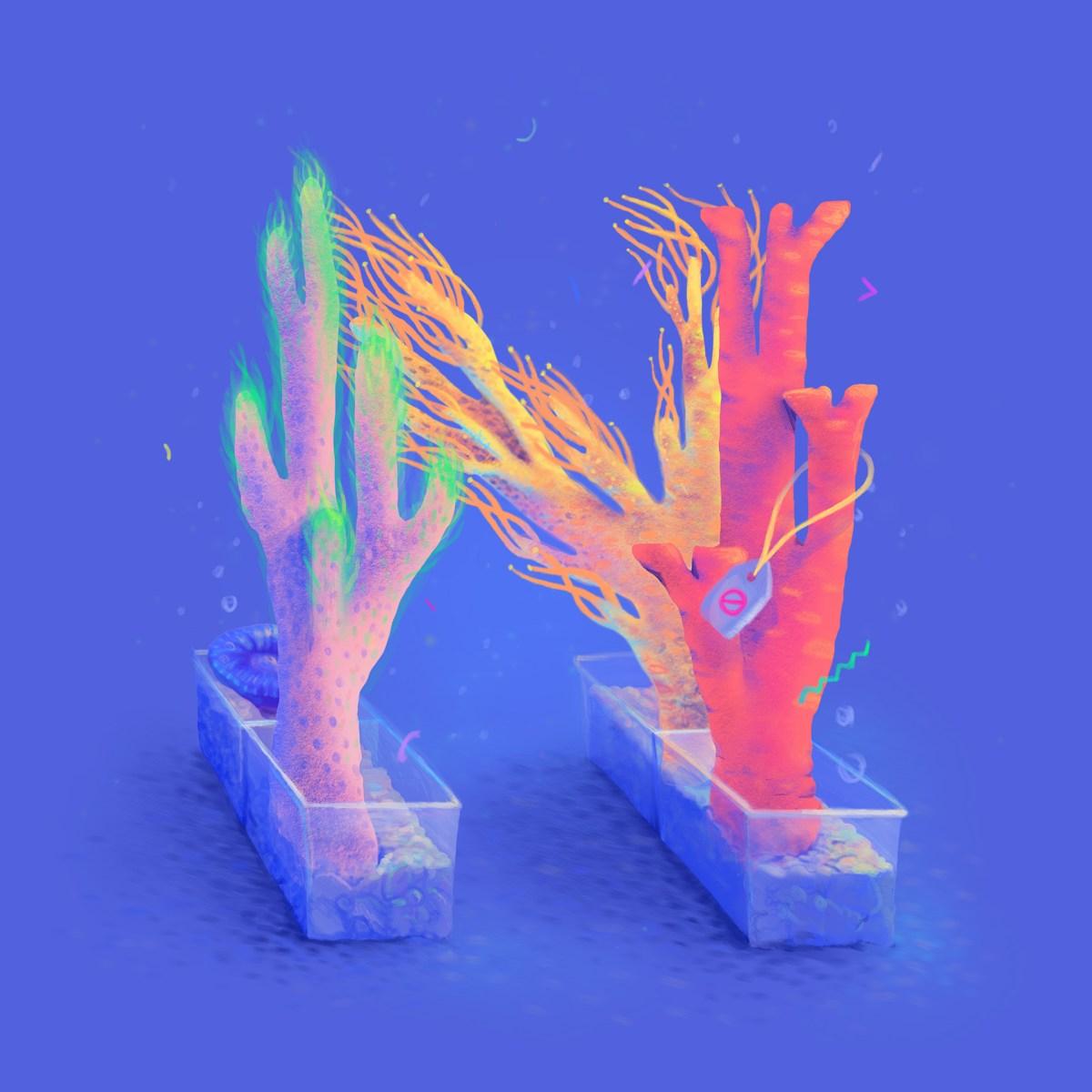 coral-n
