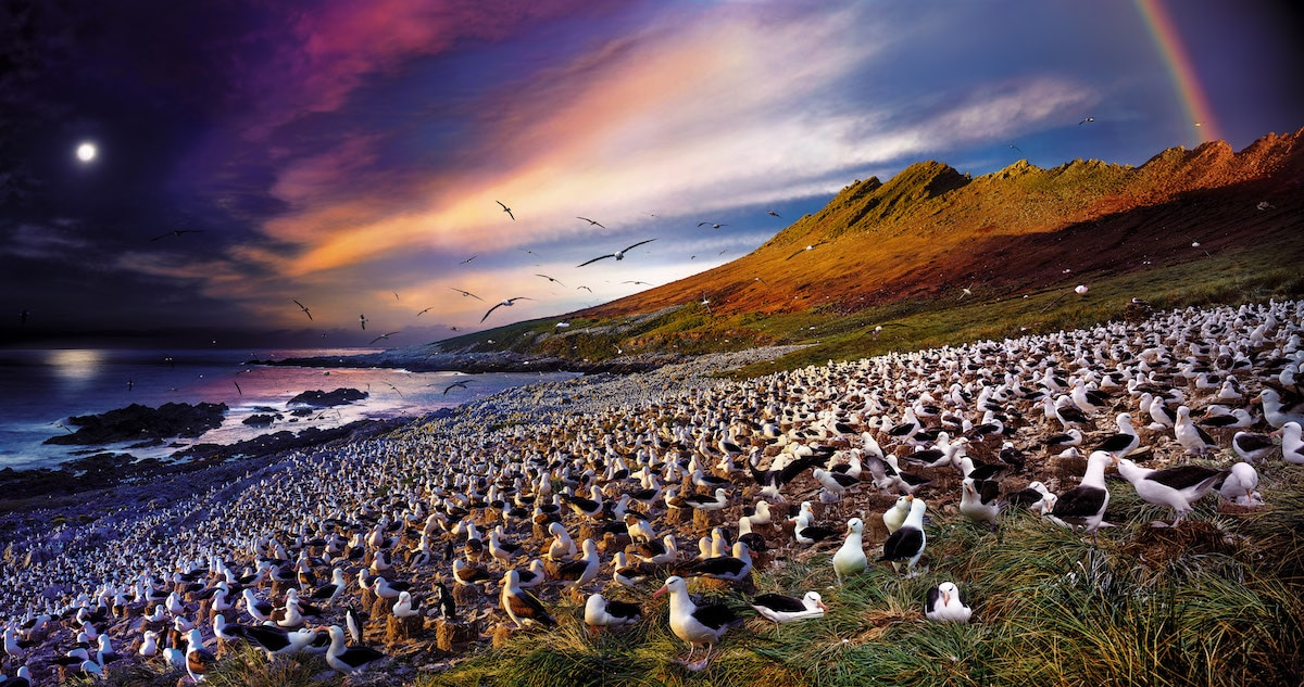 Stephen-Wilkes-Day-to-Night-ALBATROSS