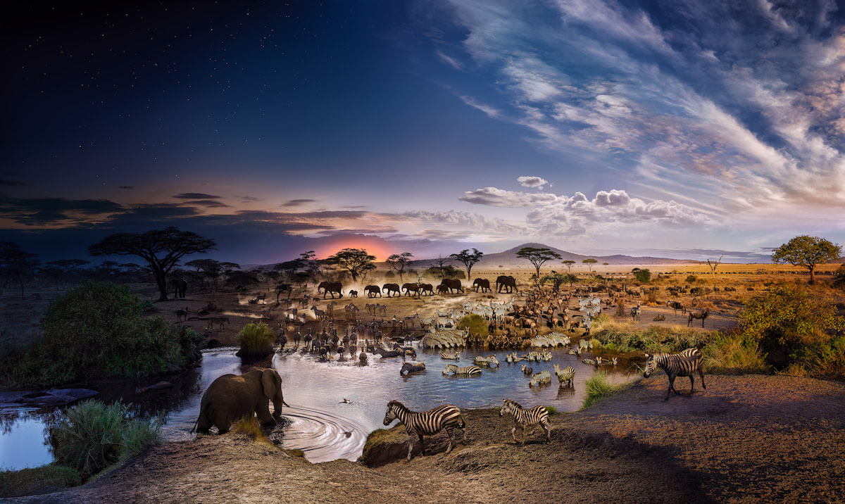 Stephen-Wilkes-Day-to-Night-SERENGETI