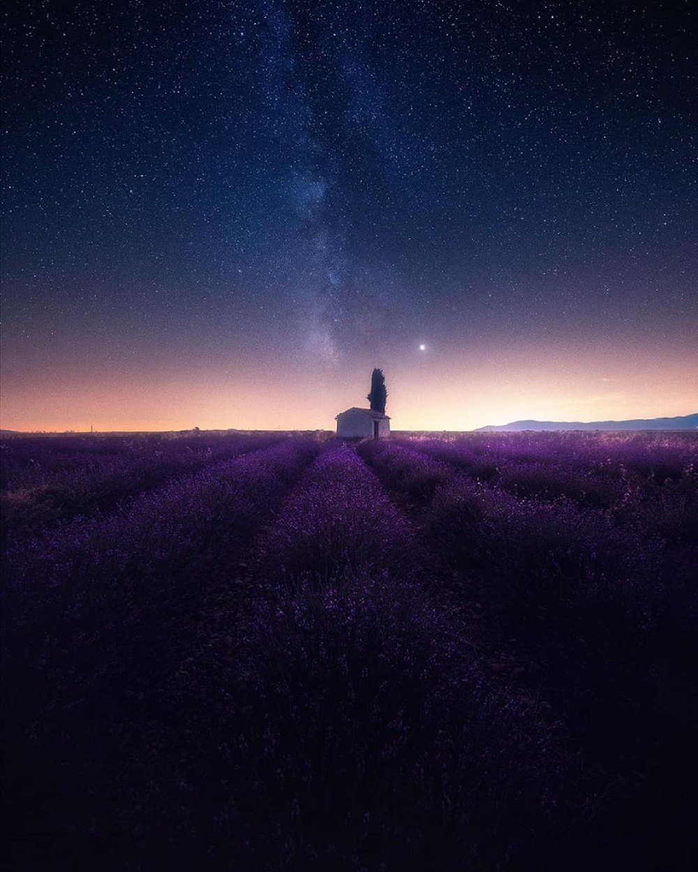 lavender-field-aerial-photography-samir-belhamra-5d5fa04d77da1__880