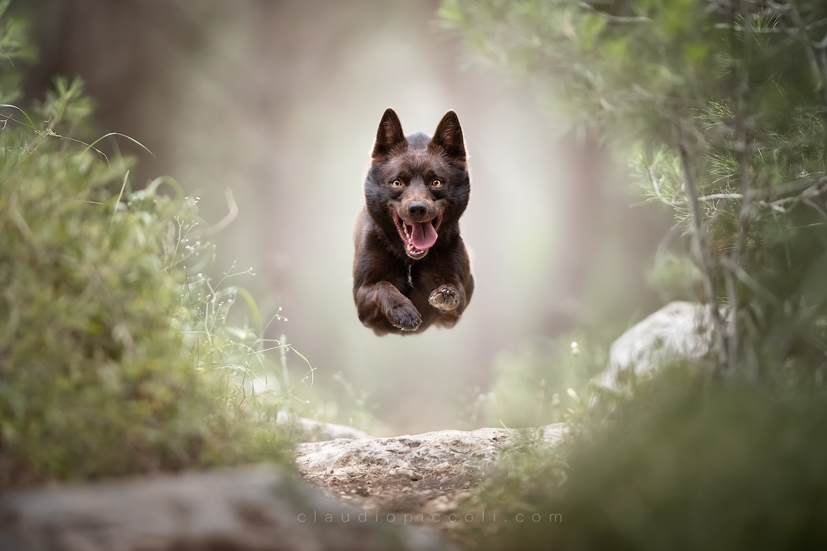 claudio-piccoli-dogs-in-action-2
