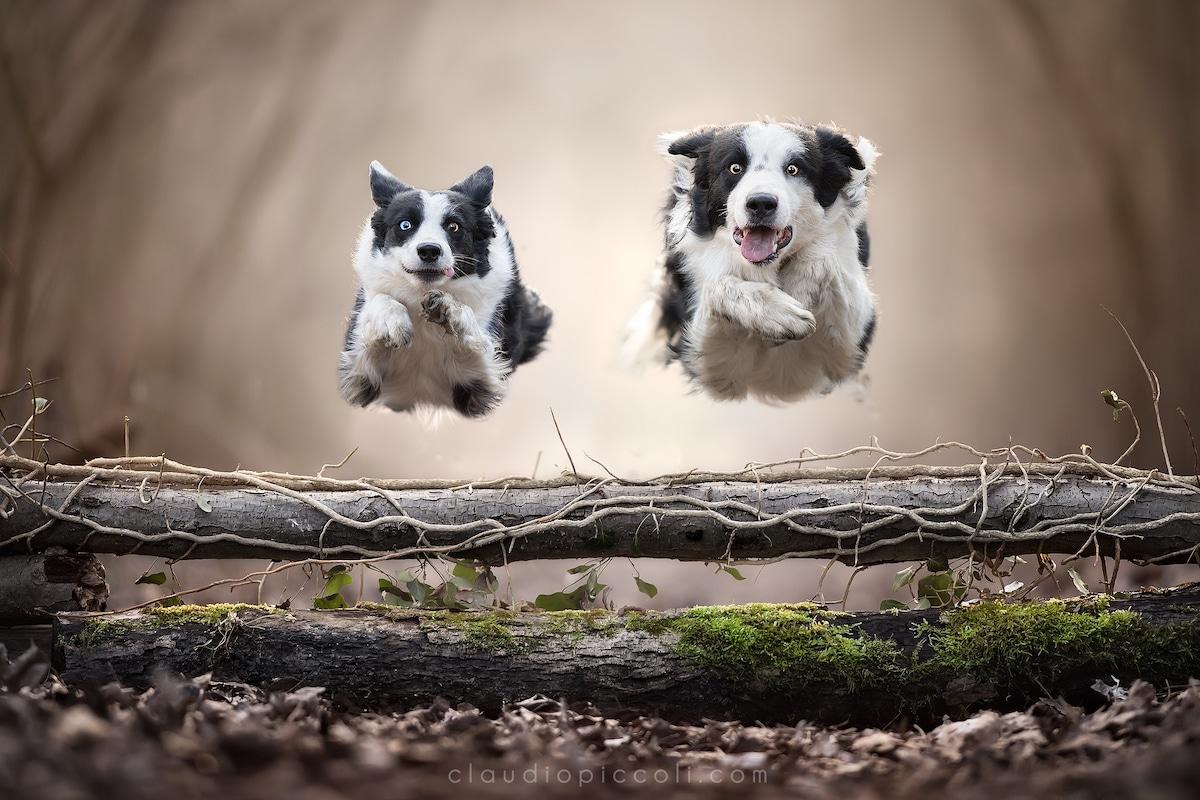 claudio-piccoli-dogs-in-action-7