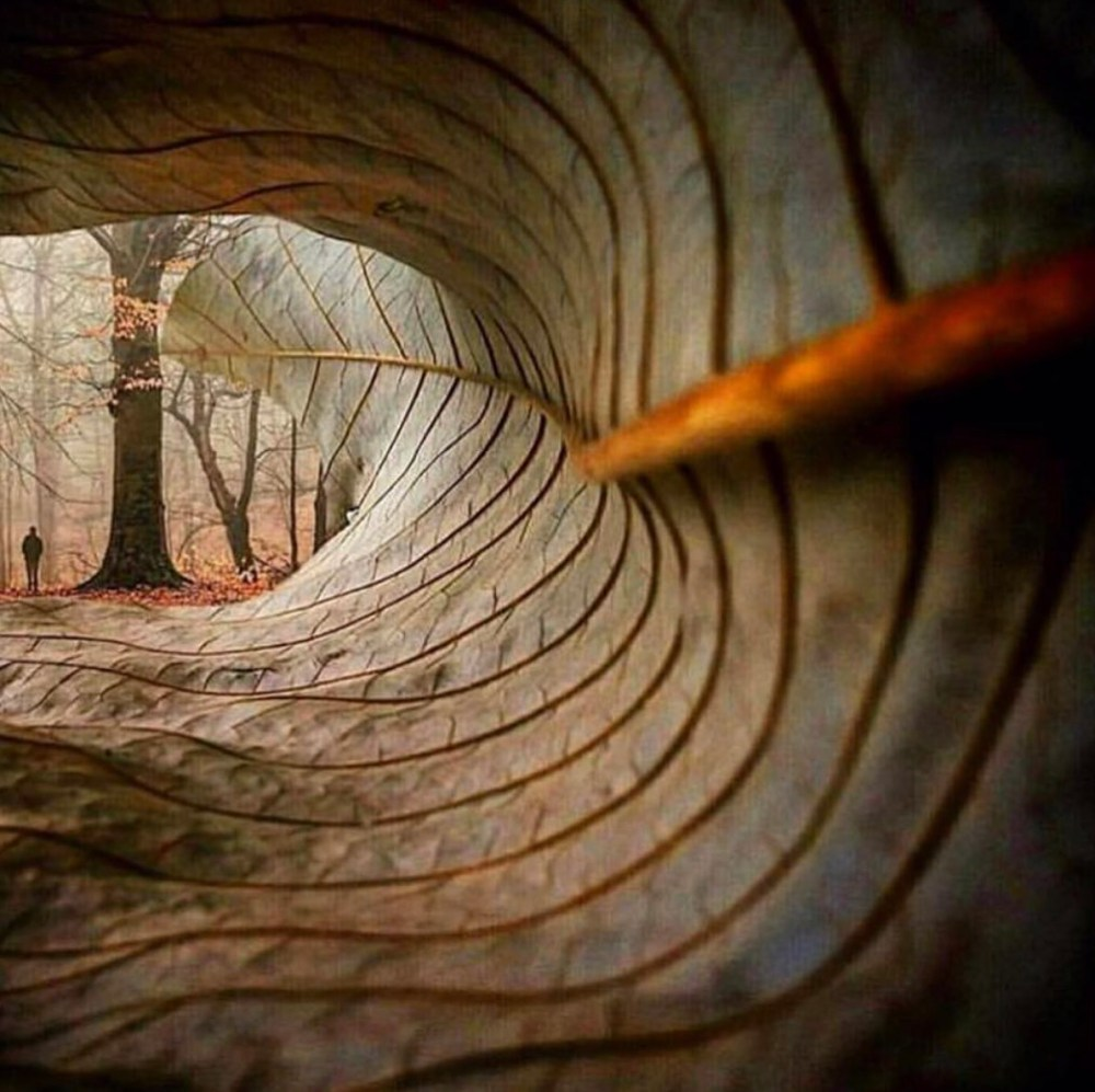 leaf perspective