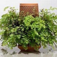 Terraplanter is an Inside Out, Self Watering Planter That Needs No Soil