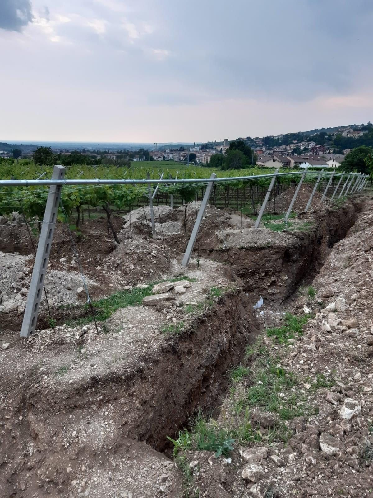 Valpolicella-vinyard