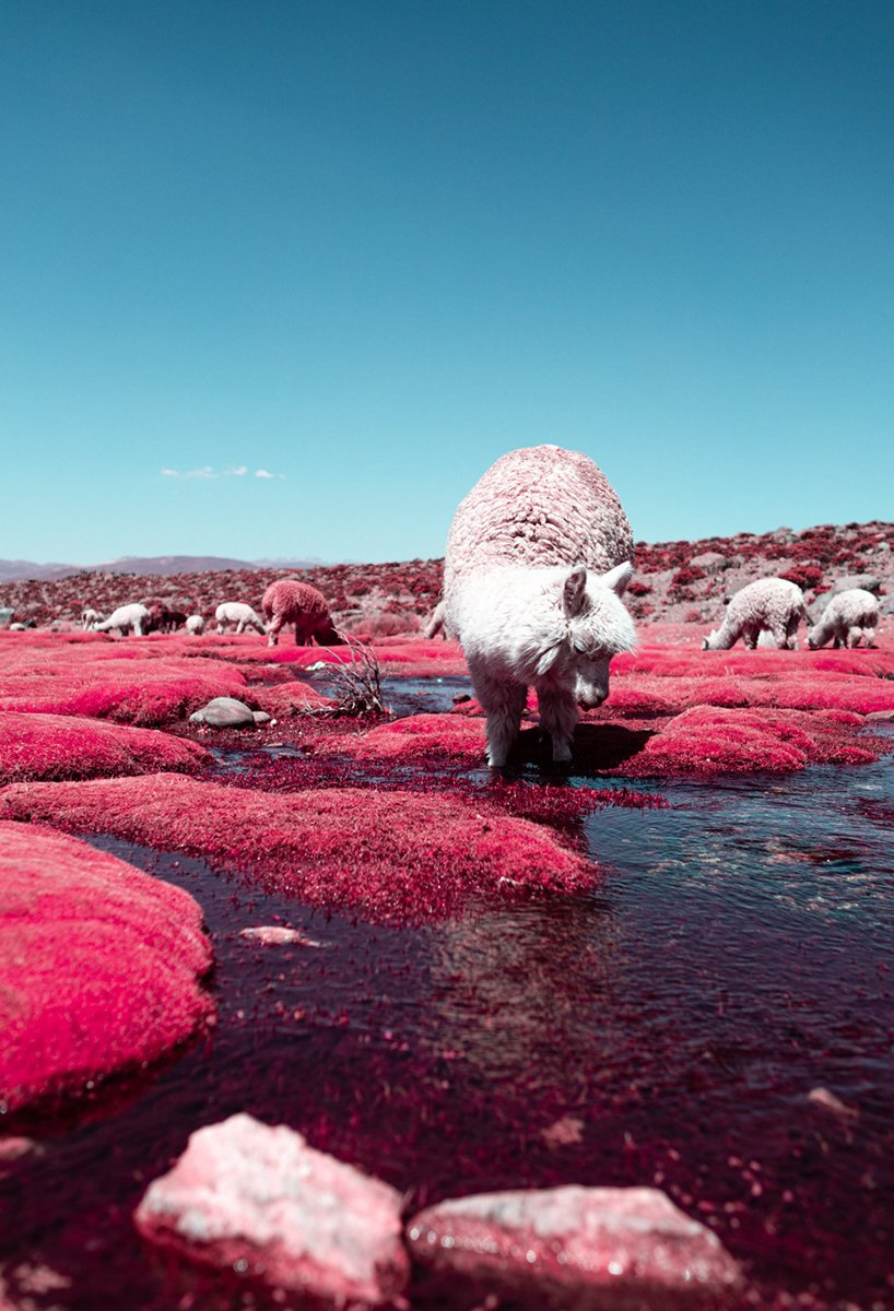 paolo-pettigiani-alpaca-river-infrared-photography-peru-moss-and-fog3