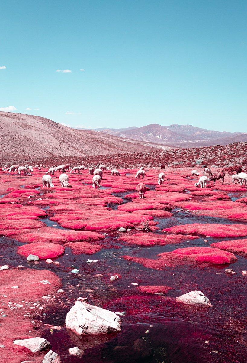 paolo-pettigiani-alpaca-river-infrared-photography-peru-moss-and-fog4