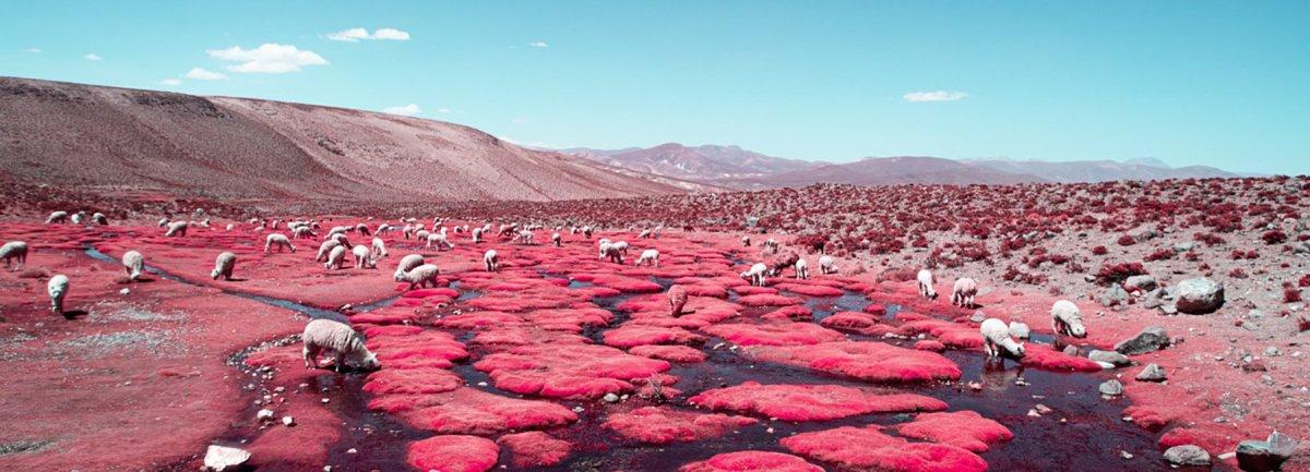 paolo-pettigiani-alpaca-river-infrared-photography-peru-moss-and-fogcover