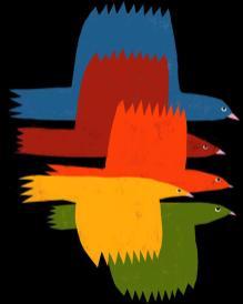 Birds_800x800