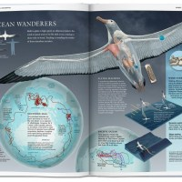 128 Years of National Geographic Infographics