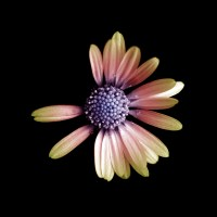 Stunning Flower Portraits
