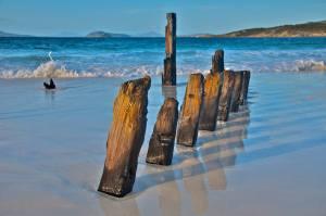 Rebecca Dixon albany pylon beach scene