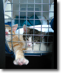 jailbreak cats