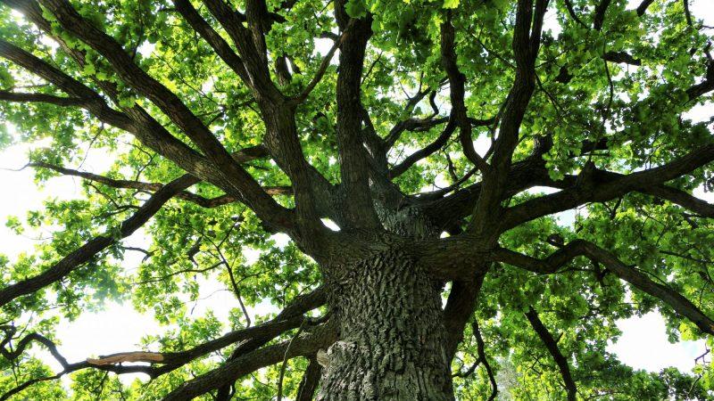 Super Bowl Urban Forestry Initiative