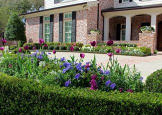 Spring color in full bloom.