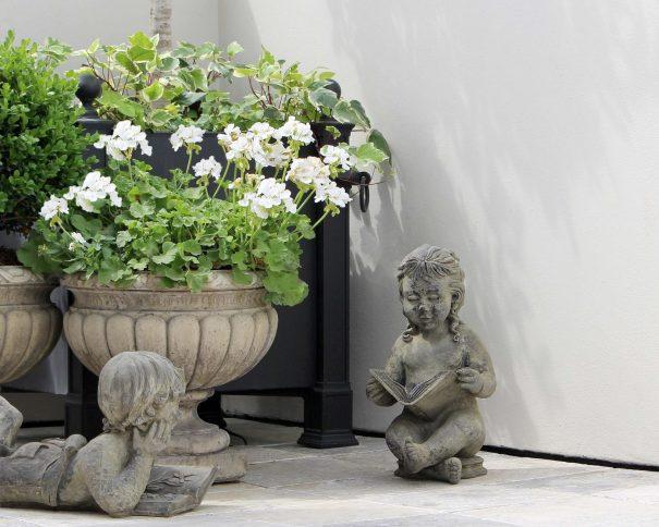 White Geraniums.