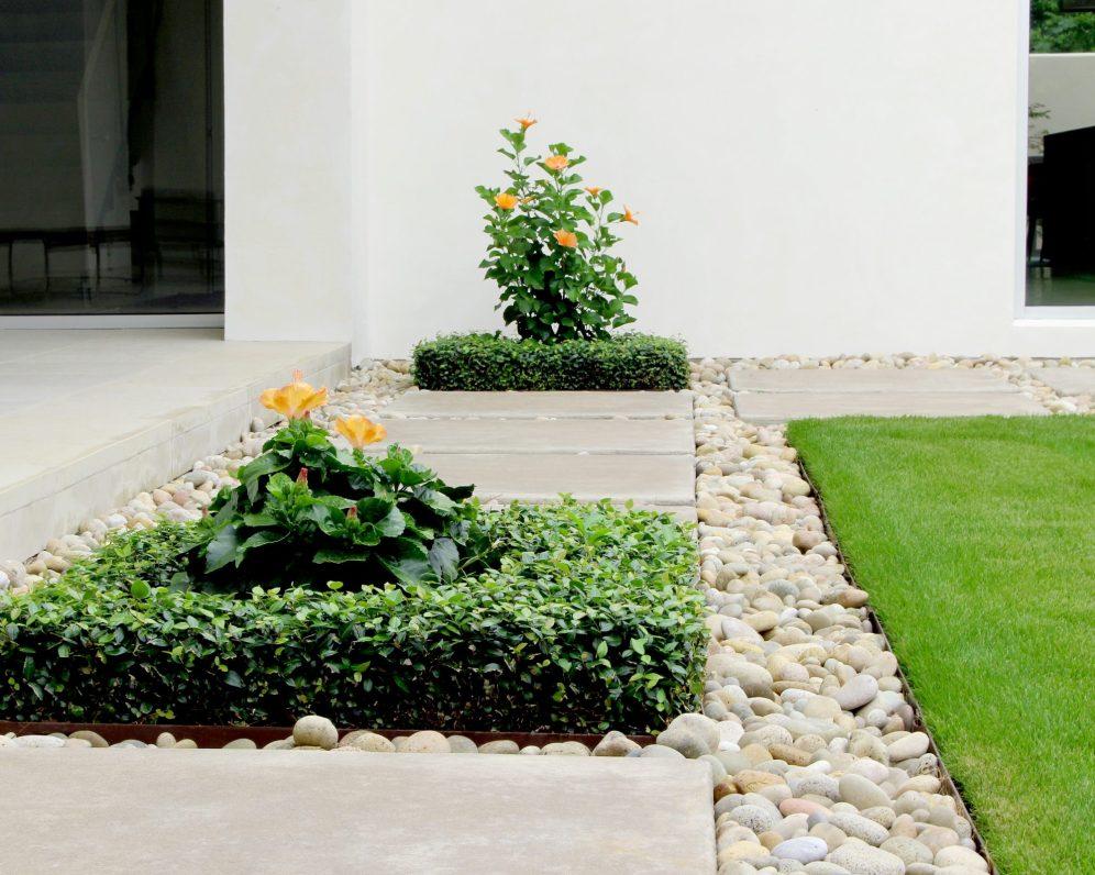 Hibiscus Gravel Grass Jasmine