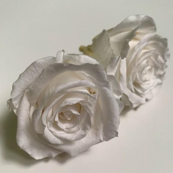роза белая1