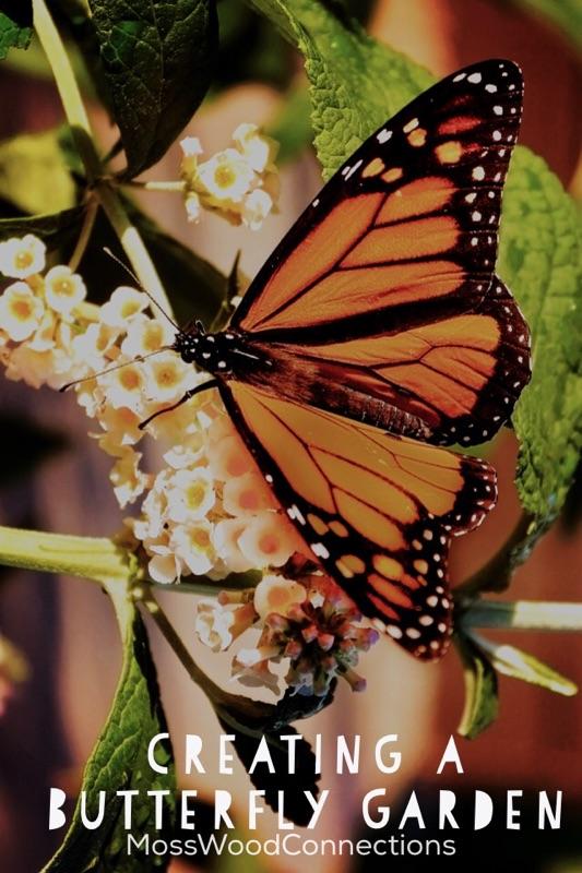 Bon Creating A Butterfly Garden