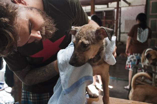Volunteering at the 4PAWS dog shelter in Penang, Malaysia