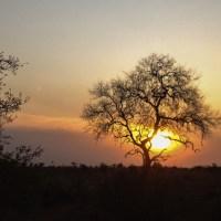 A Week in Kruger - Satara to Timbavati