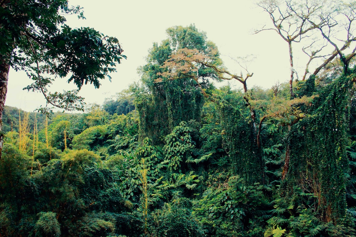 Rainforest | What are Carbon Offsets?