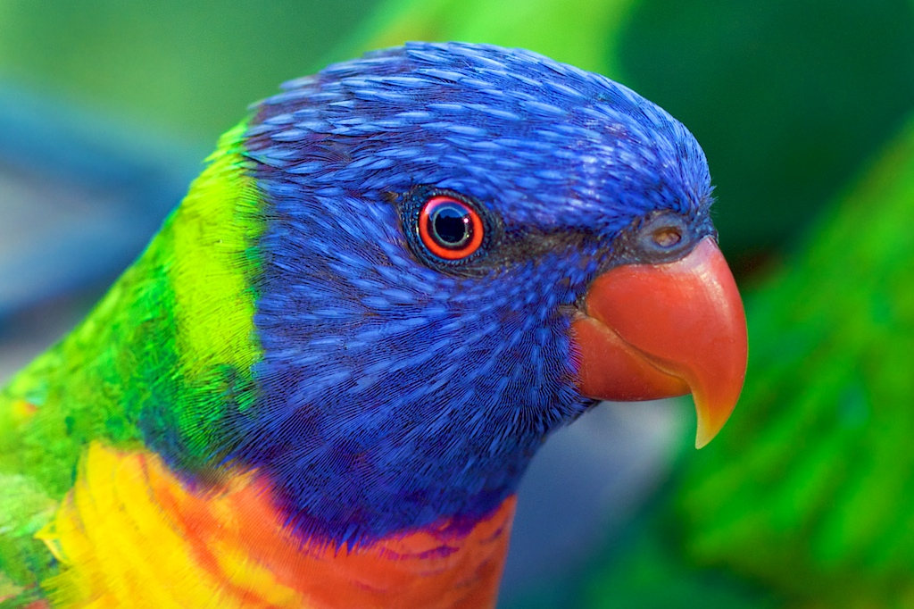 Photography tips I learnt from this Rainbow Lorikeet