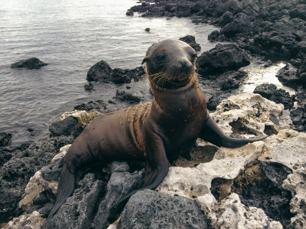 Baby sea lion. Aww.