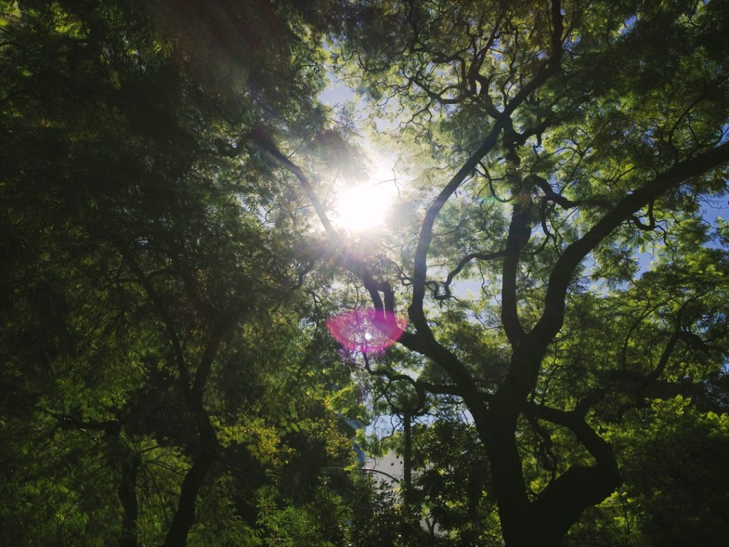 treesBA
