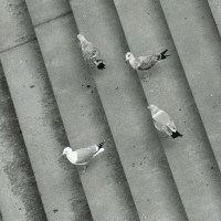 Gulls and Stairs