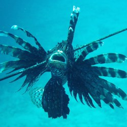 Lion fish is having a supremely bad day
