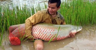 Pescado amazónico Paiche
