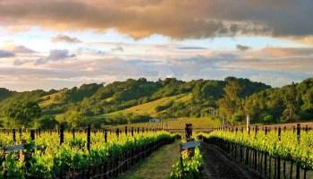 El Grupo Santa Rita se acada de certificar de acuerdo al Código de Sustentabilidad de Vinos de Chile