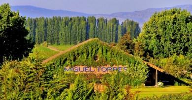 La viña Miguel Torres Chile cumple 40 años en nuestro país
