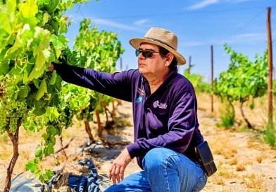 Marcelo Lanino, director del proyecto vino del desiero, habla sobre la vendimia en tiempos de COVID-19