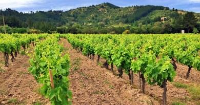 Te presentamos tres cepas que no son tan conocidas en Chile, pero con las cuales se elaboran vinos premiados por los críticos nacionales.