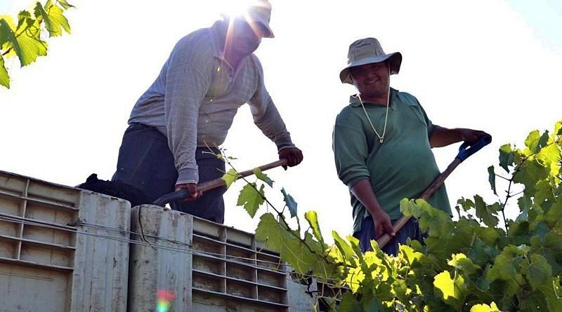 Dos grandes avances en materia de sustentabilidad se han producido en los últimos días en la industria del vino chileno.