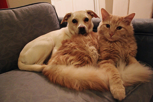 cat dog photo