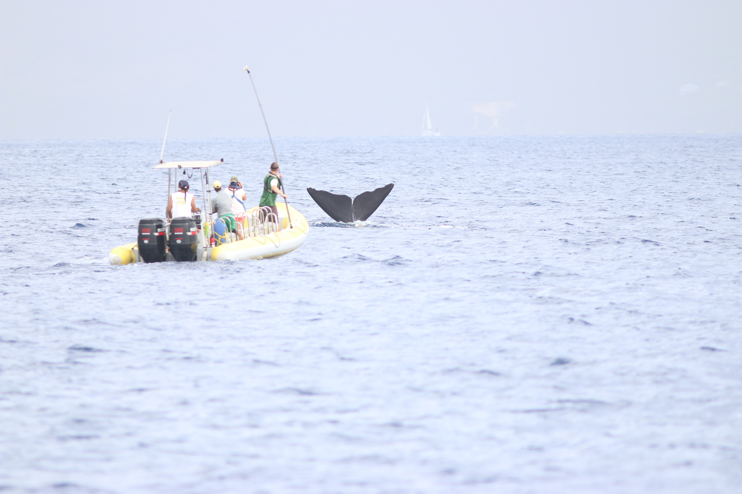 Sperm whale research off Dominica. Image: The Dominica Sperm Whale Project