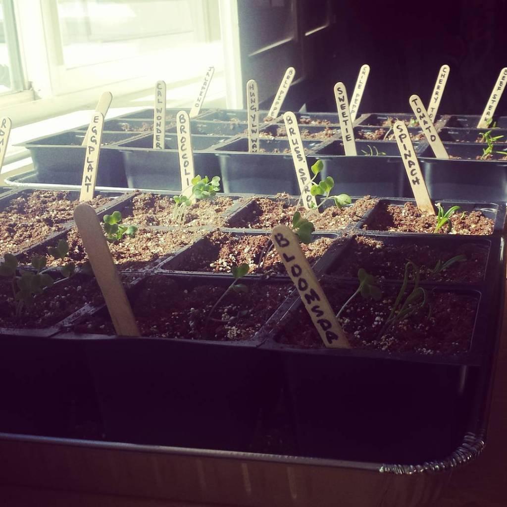 Grow grow little garden