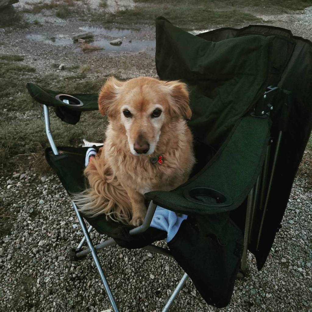 Doesnt everyone bring their dog their own camping chair? Campinghellip