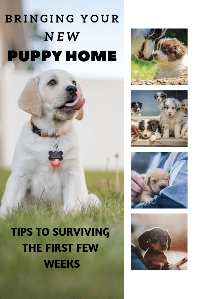 Bringing Your New Puppy Home - The First 48 Hours - Wag The Pup
