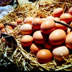 egg donor and egg donation options. Your own eggs aren't working. Pros and cons of fressh vs frozen donor eggs