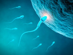 How should I choose a sperm donor or egg donor?
